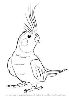 Cockatiel coloring #5, Download drawings