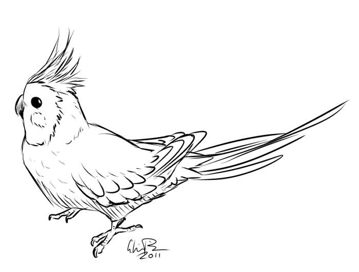 Cockatiel coloring #18, Download drawings