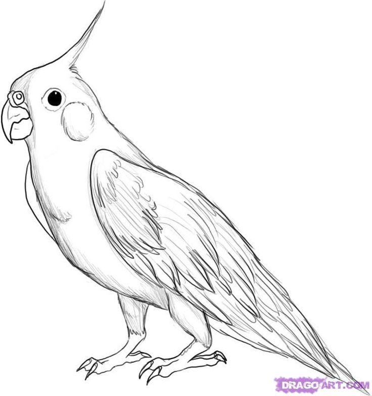 Cockatiel coloring #16, Download drawings