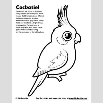 Cockatiel coloring #19, Download drawings