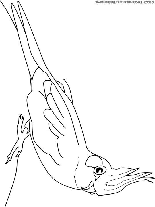 Cockatiel coloring #17, Download drawings