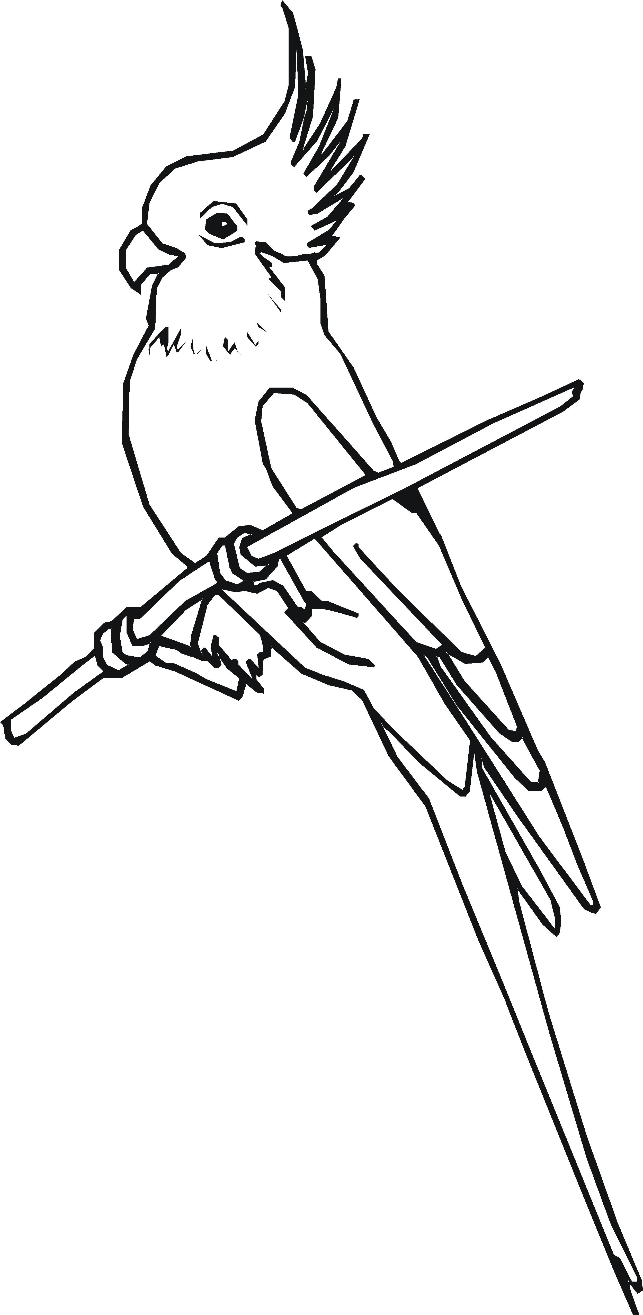 Cockatiel coloring #3, Download drawings