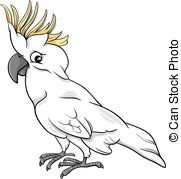 White Cockatoo clipart #20, Download drawings