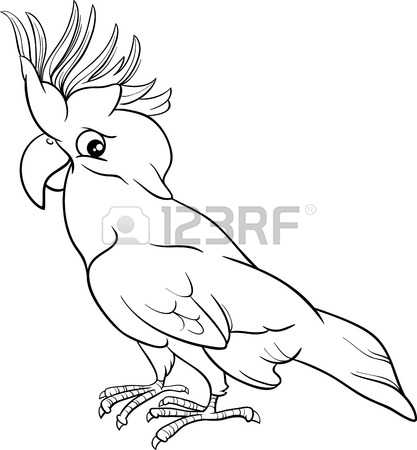 Cockatoo clipart #2, Download drawings