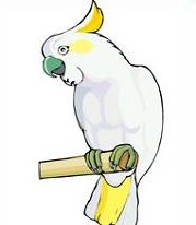White Cockatoo clipart #19, Download drawings