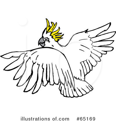 Cockatoo clipart #17, Download drawings
