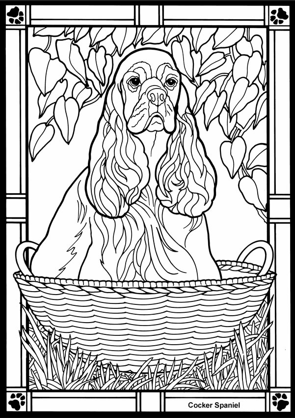 english springer spaniel coloring pages - photo#23
