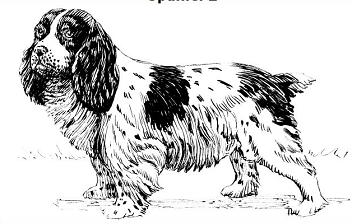 Spaniel clipart #4, Download drawings