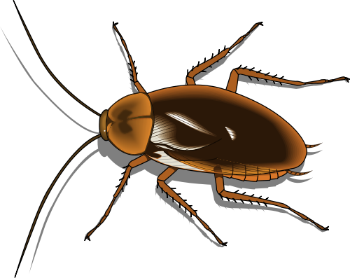 Cockroach clipart #16, Download drawings