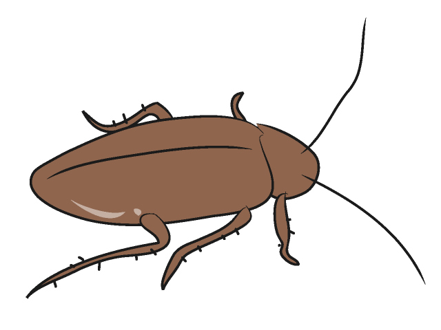 Cockroach clipart #17, Download drawings