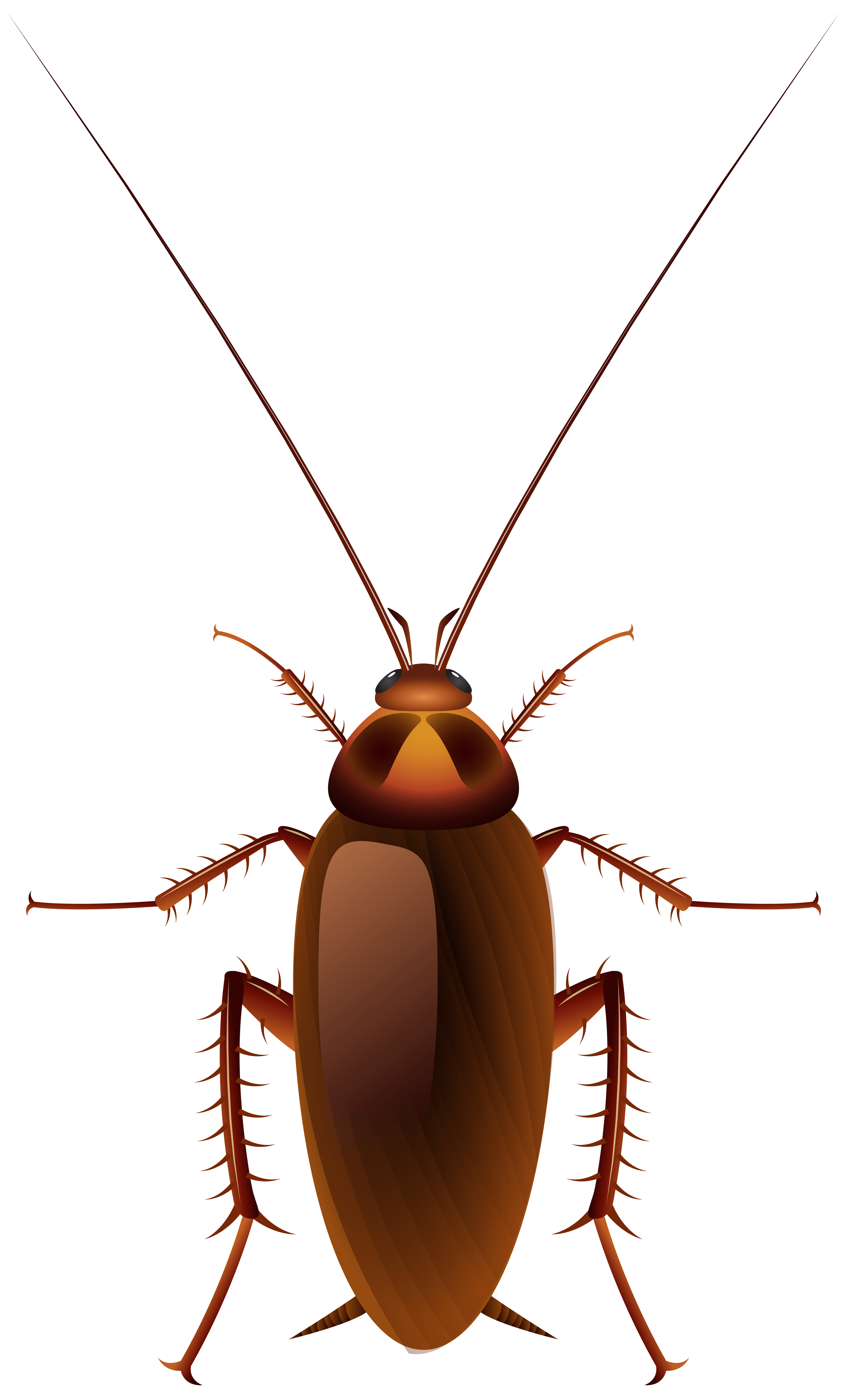 Cockroach clipart #2, Download drawings