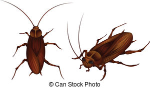 Cockroach clipart #20, Download drawings