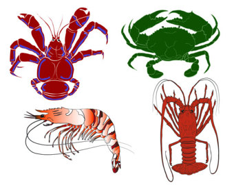 Coconut Crab clipart #19, Download drawings