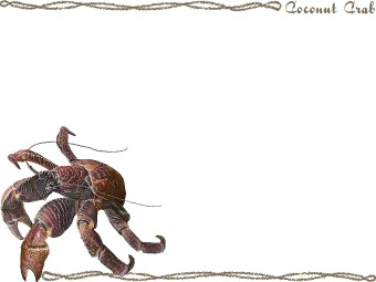 Coconut Crab clipart #10, Download drawings