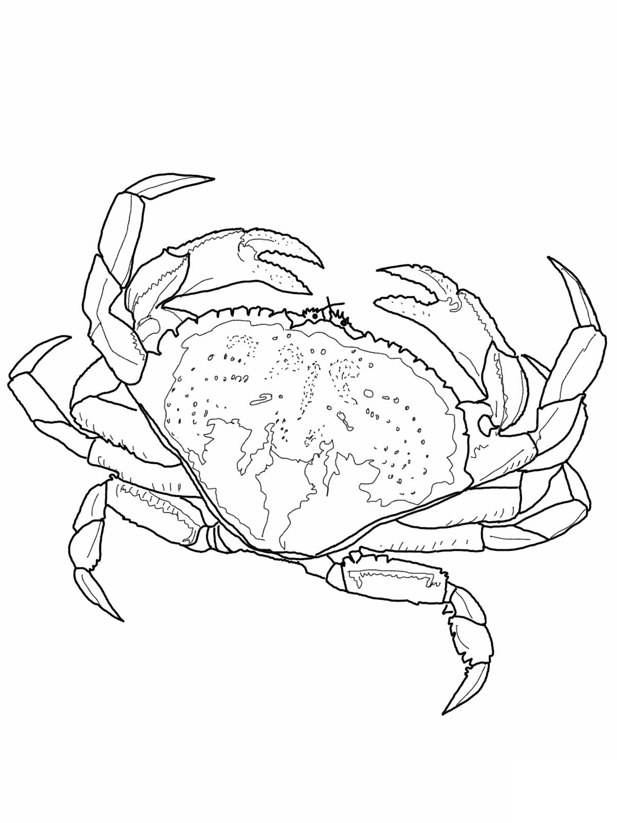 Coconut Crab coloring #10, Download drawings