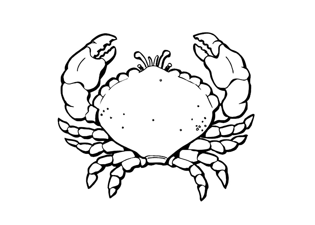 Coconut Crab coloring #4, Download drawings