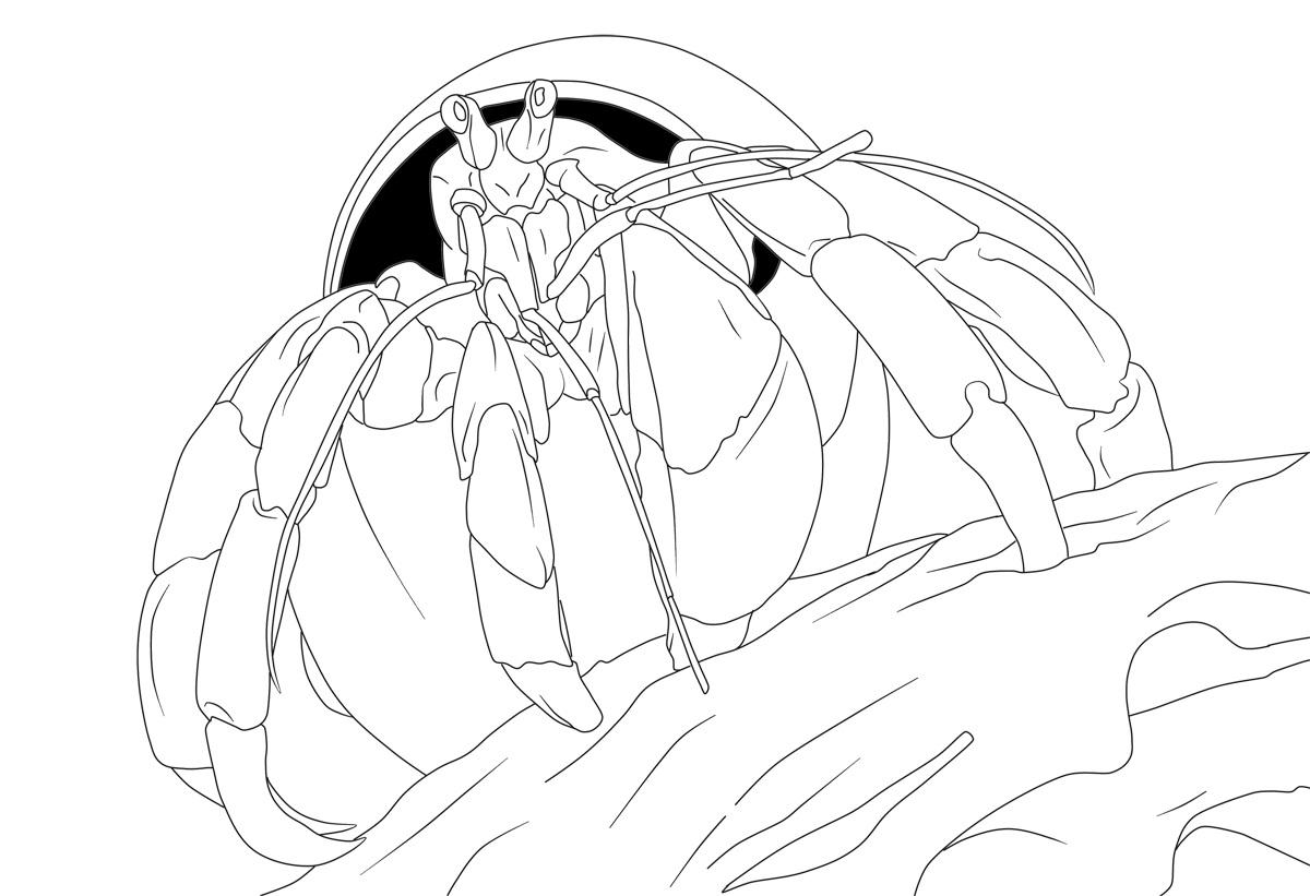 Coconut Crab coloring #2, Download drawings