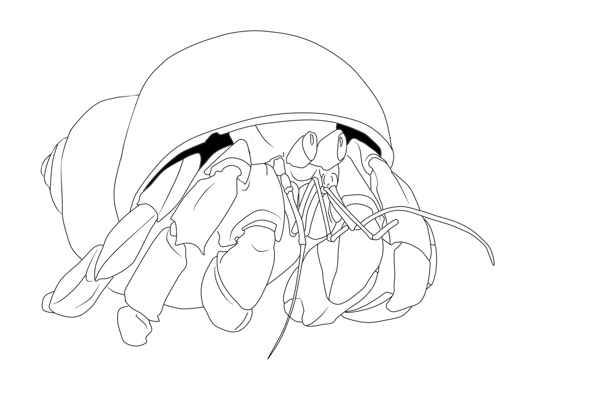 Coconut Crab coloring #9, Download drawings