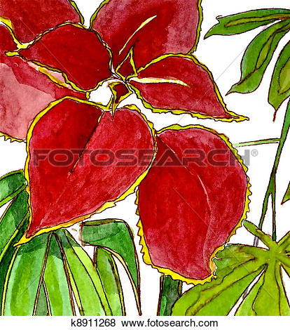 Coleus clipart #10, Download drawings