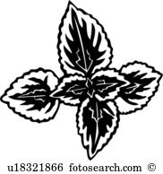 Coleus clipart #6, Download drawings