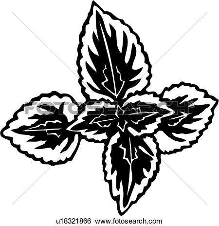 Coleus clipart #15, Download drawings