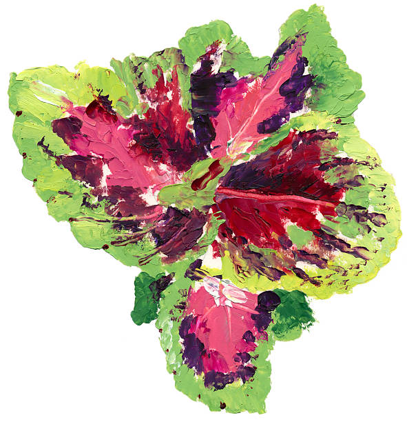 Coleus clipart #17, Download drawings