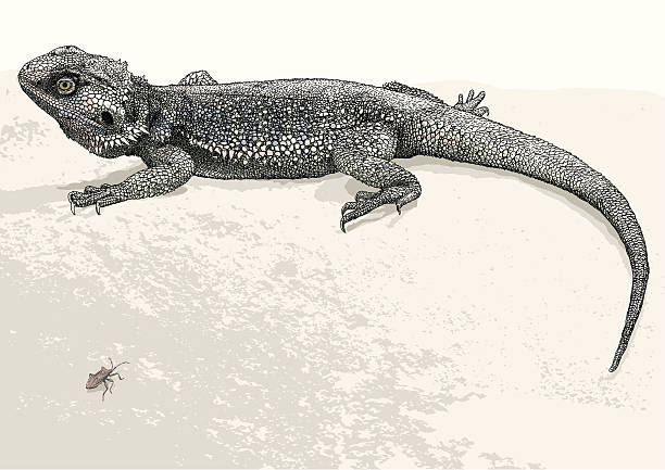 Collared Lizard clipart #15, Download drawings