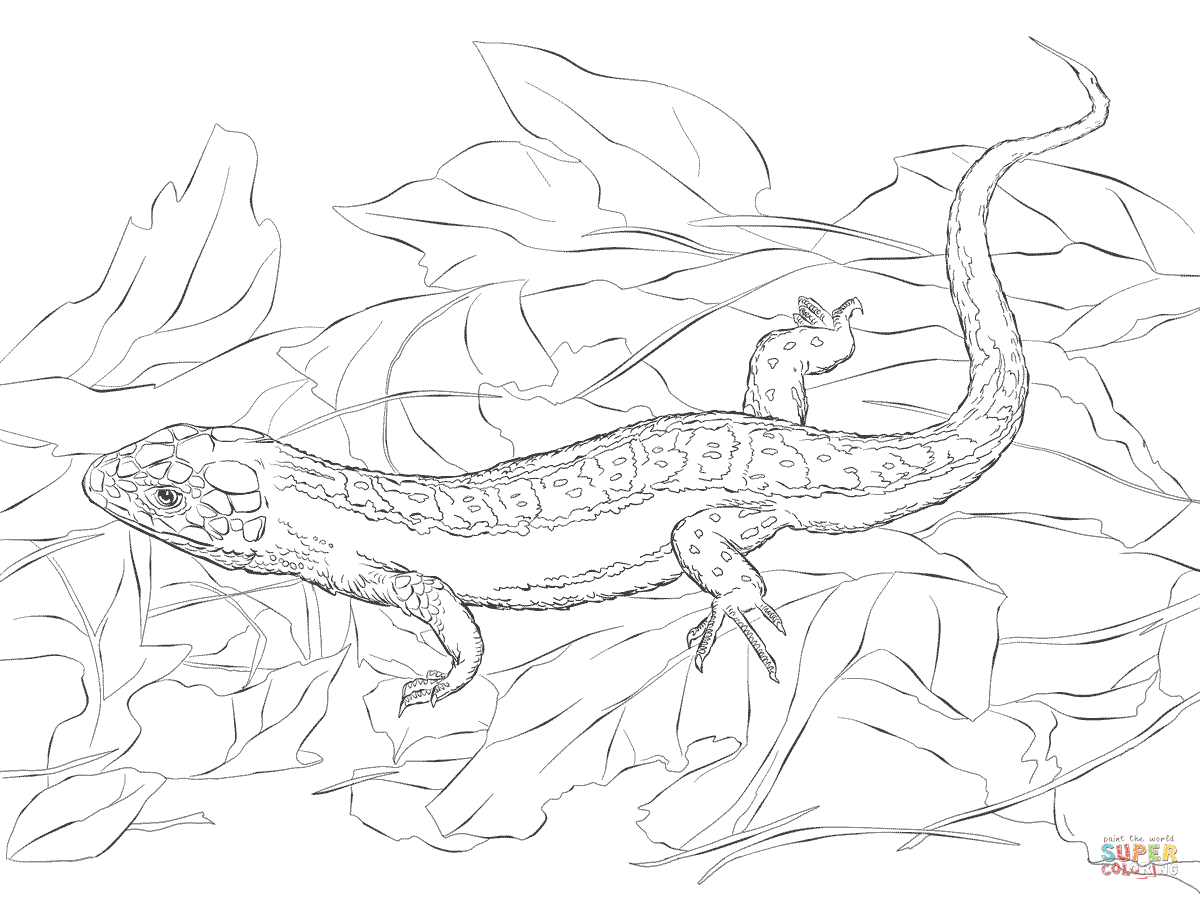Sand Lizard coloring #4, Download drawings