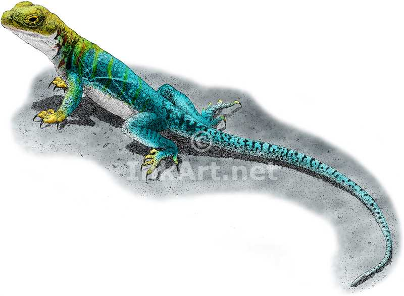 Collared Lizard coloring #7, Download drawings