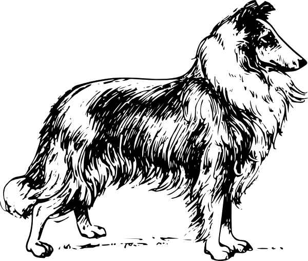 Collie clipart #3, Download drawings