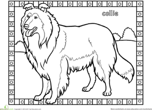 Collie coloring #1, Download drawings