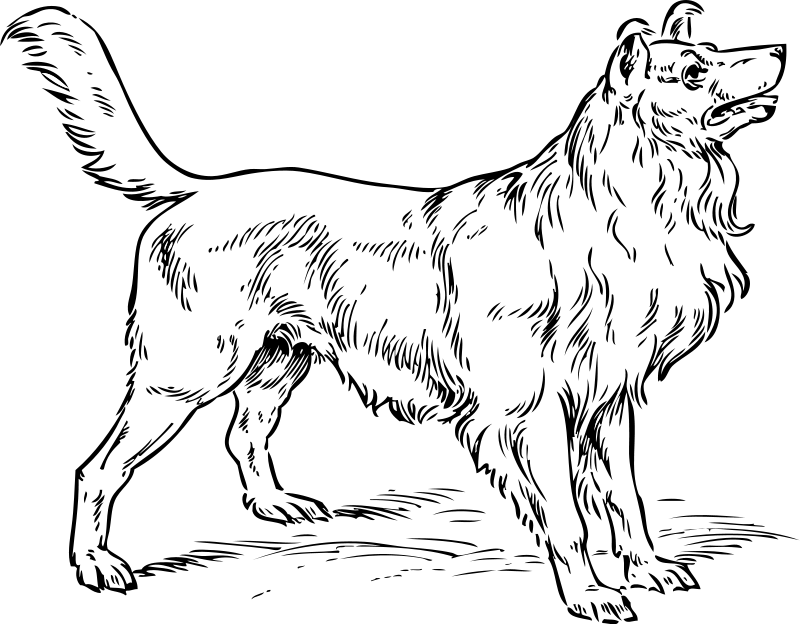 Collie coloring #12, Download drawings