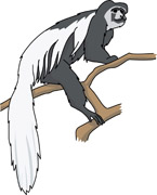 Colobus Monkey  clipart #20, Download drawings