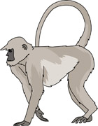 Colobus Monkey  clipart #19, Download drawings