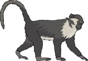 Colobus Monkey  clipart #18, Download drawings