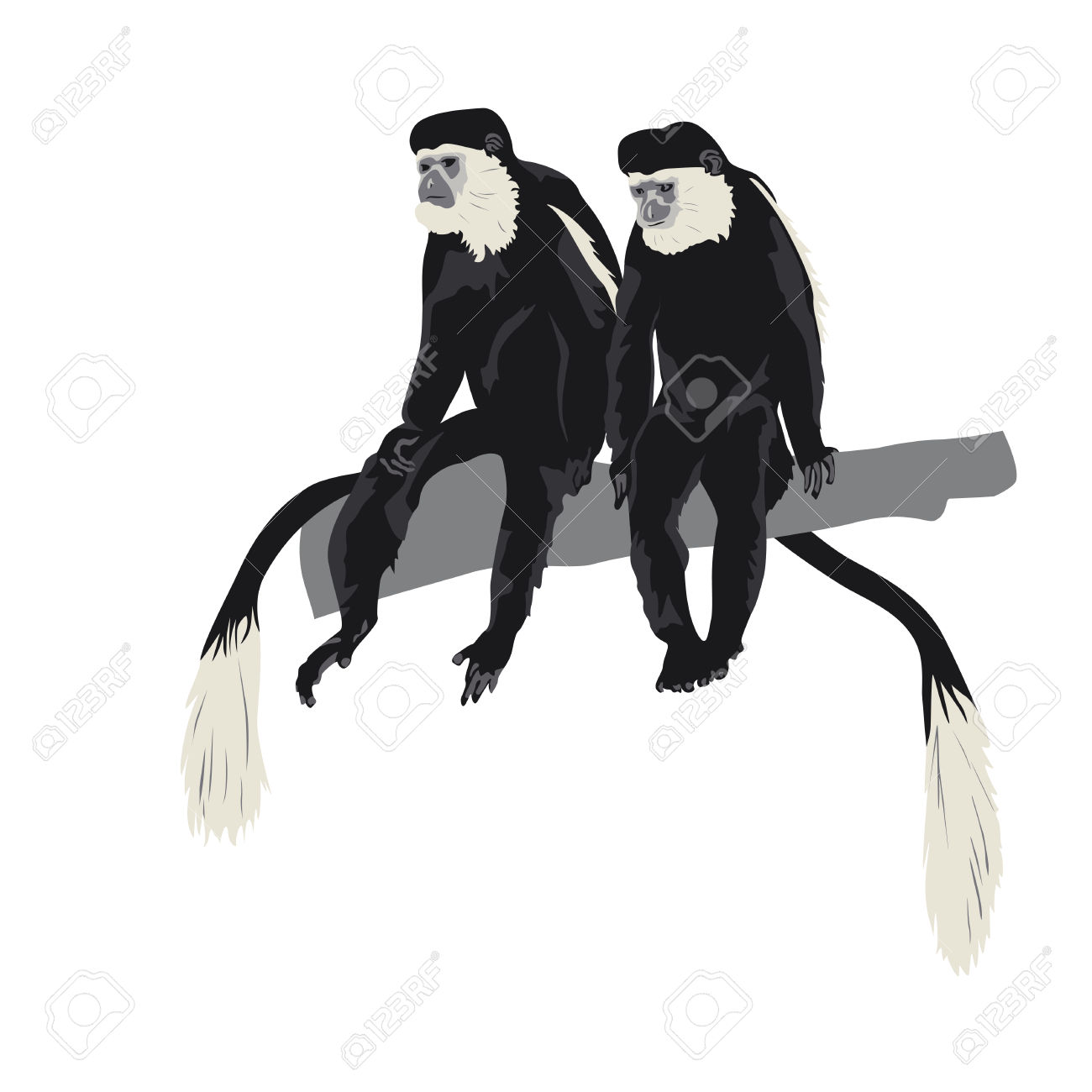Colobus Monkey  clipart #14, Download drawings