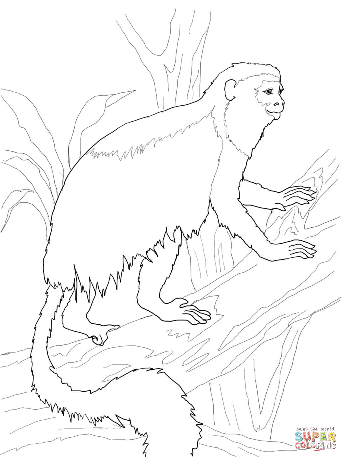 Colobus Monkey  coloring #10, Download drawings