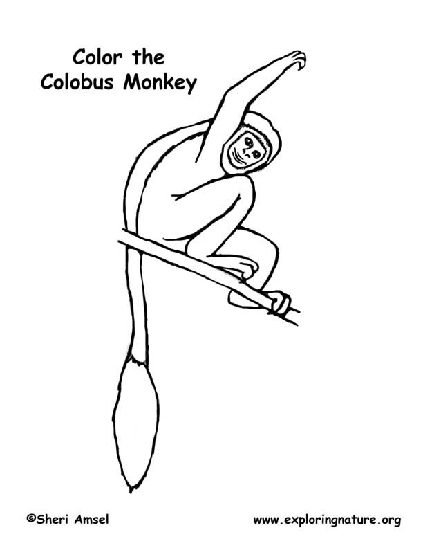 Colobus Monkey  coloring #20, Download drawings