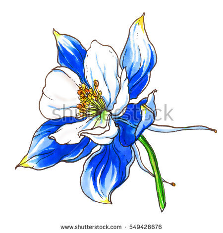 Colorado Blue Columbine clipart #10, Download drawings