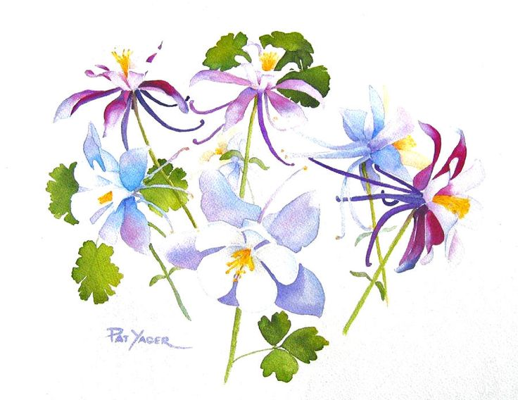 Colorado Blue Columbine clipart #7, Download drawings