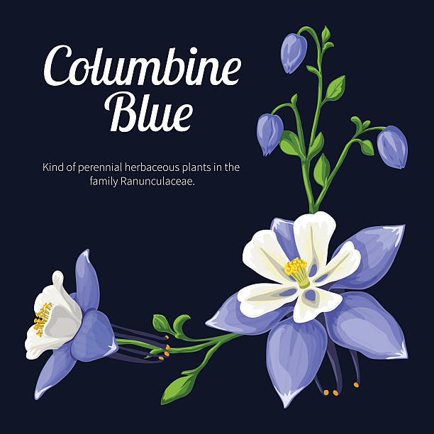Colorado Blue Columbine clipart #4, Download drawings