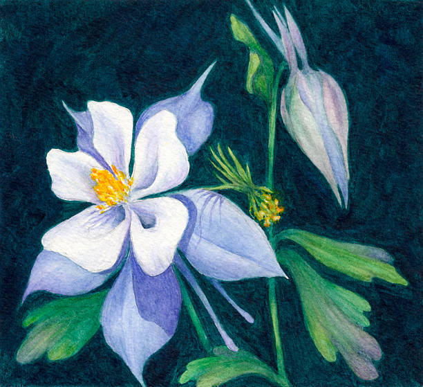 Colorado Blue Columbine clipart #3, Download drawings