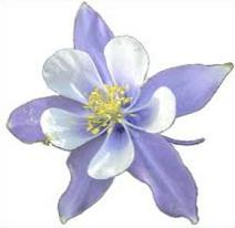 Colorado Blue Columbine clipart #20, Download drawings