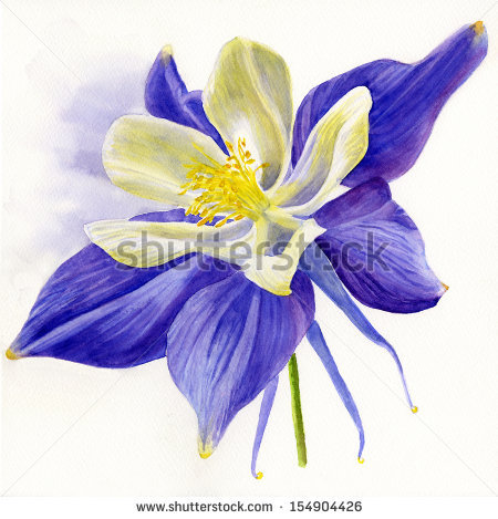 Colorado Blue Columbine clipart #15, Download drawings