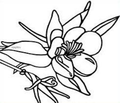 Colorado Blue Columbine clipart #16, Download drawings