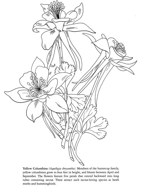 coloring pages columbine - photo#9
