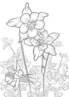 Columbine coloring #7, Download drawings