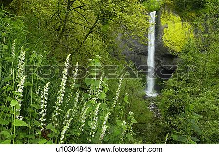 Best Columbia River Gorge Illustrations, Royalty-Free ... |Clipart Columbia Gorge