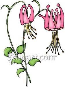 Columbine clipart #12, Download drawings