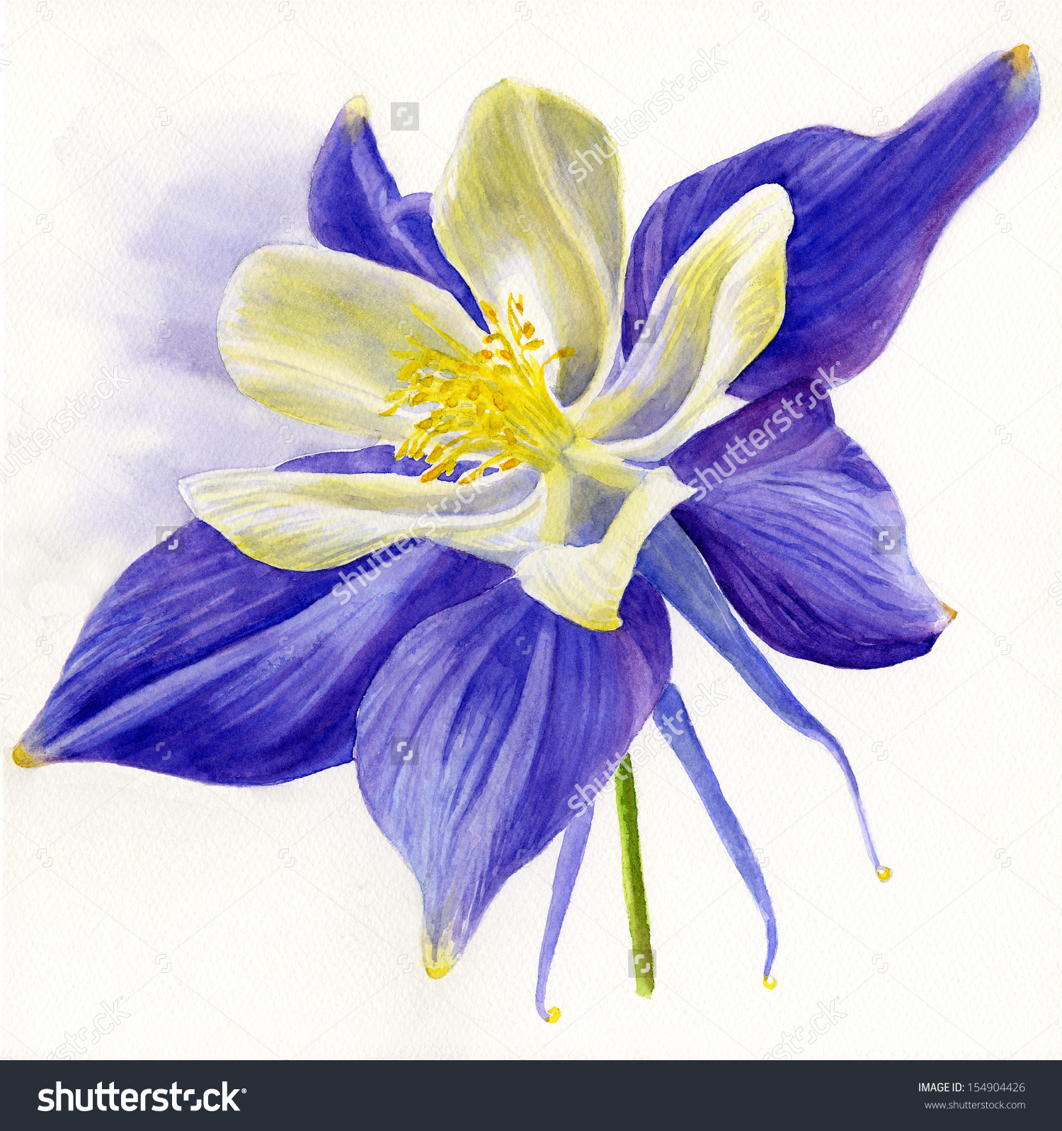 Columbine clipart #4, Download drawings